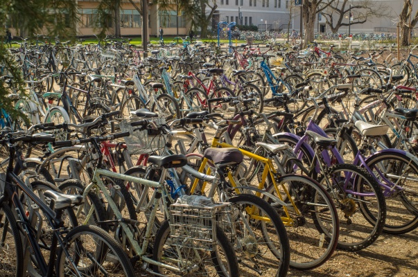 Bikes at UC Davis campus